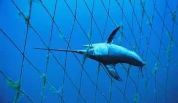 Bycatch ovvero le vittime collaterali della pesca industriale